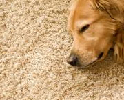 Spotless Carpet Cleaning Pleasanton