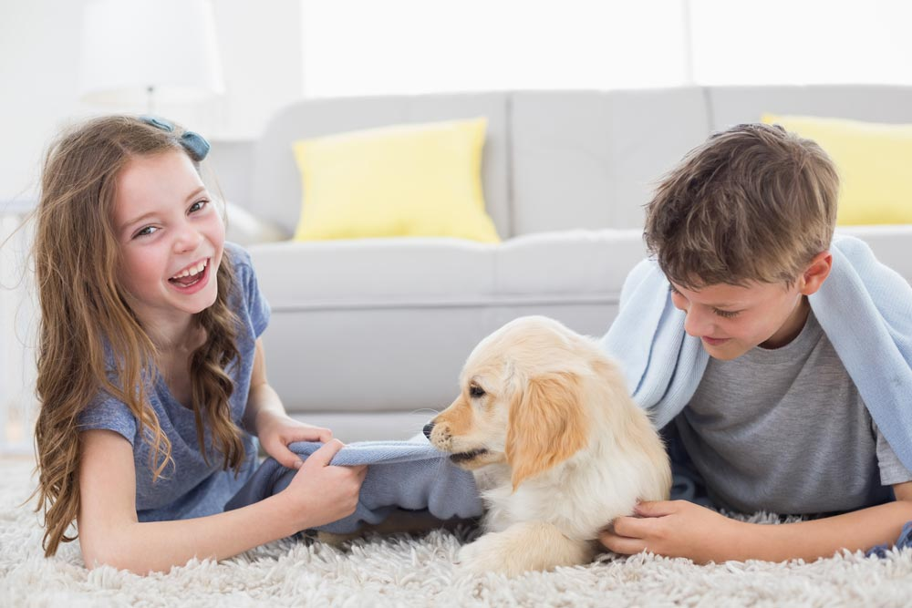 Pet Spills Cleaner In Greater Pleasanton Area - Spotless